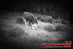 20190511-hirschbachtal-classic-samstag-0051-2834