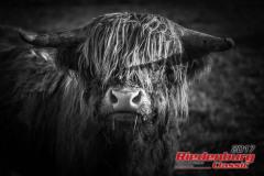 20170922-riedenburg-classic-freitag-0025-78